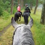 Paard en groep