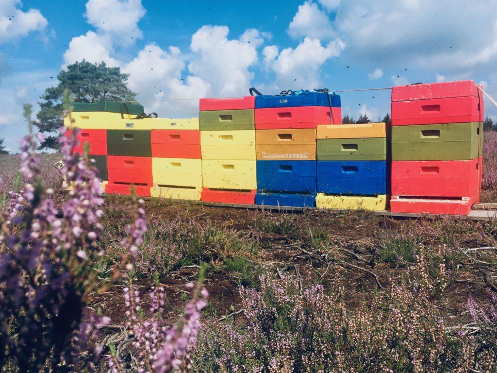 Bijenkasten heide Epe